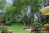 backyard_7881