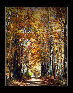 Golden Lane ~ Traphill NC