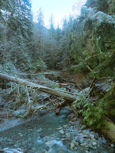 Stream With Tree Collapse