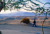 A man and donkey heading into the afternoon light on the road beside our first Agha Jari house.