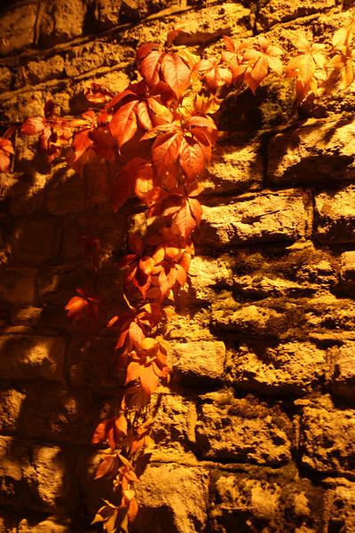 Cross of leaves