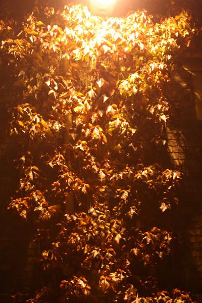 Light cascading over leaves