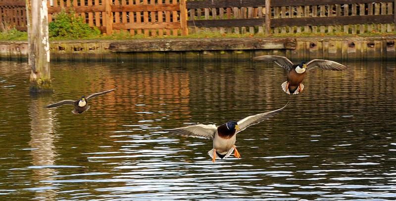Synchronised landing!!!