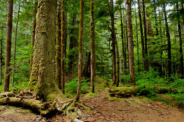 Along the Deception Falls Trail, Washington