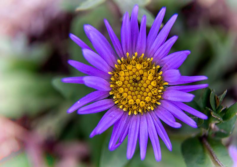 flora along Klahhane Ridge trail