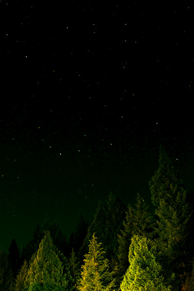 "Forest and night sky.<br><br><span class=""subcaption"">&nbsp; Fairly heavy PS adjustments around noise, contrast, and color balance.</span>"
