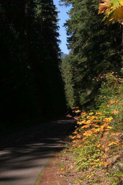 McKenzie pass road.