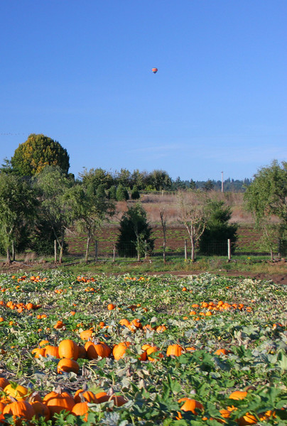 Pumpkin farm with complete train ride and petting zoo.