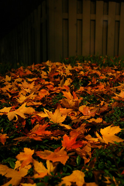 Autumn at the condo complex. Only light was a lone street lamp.