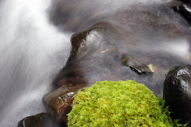 "Water and moss.<br><br><span class=""subcaption"">&nbsp; One of my first attempts at getting the blurred water effect via deliberately long exposure times. Here was 1.3-seconds.</span>"