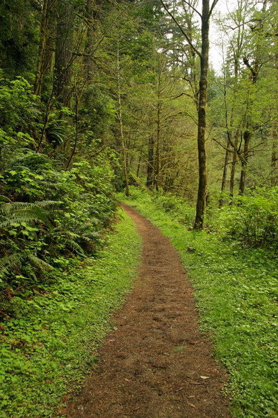 Trail to the other water fall cut through thick clover patches.