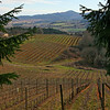 Vineyards decorate the landscape between Portland and the Pacific.