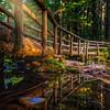 Tamolitch Falls Trail