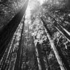 return trail upward tree view
