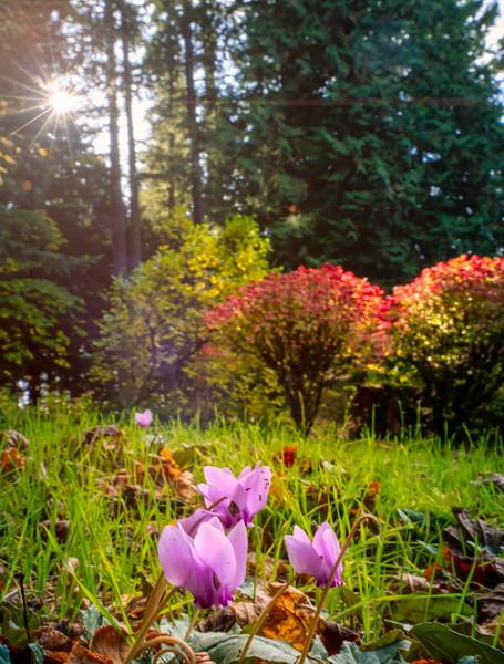 flora at Jenkins Estate