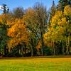 Jenkins Estate tree line