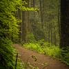 Trails below Lower South Falls