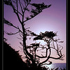 Climbing embankment at Cape Kiwanda I was greeted by this back-light lone tree.