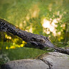 "This croc sat motionless waiting for the staff to begin feeding hour. <br><br><span class=""subcaption"">(Handheld at 1/6s done by make-shift tripod stance using elbows on a guard rail.)</span>"