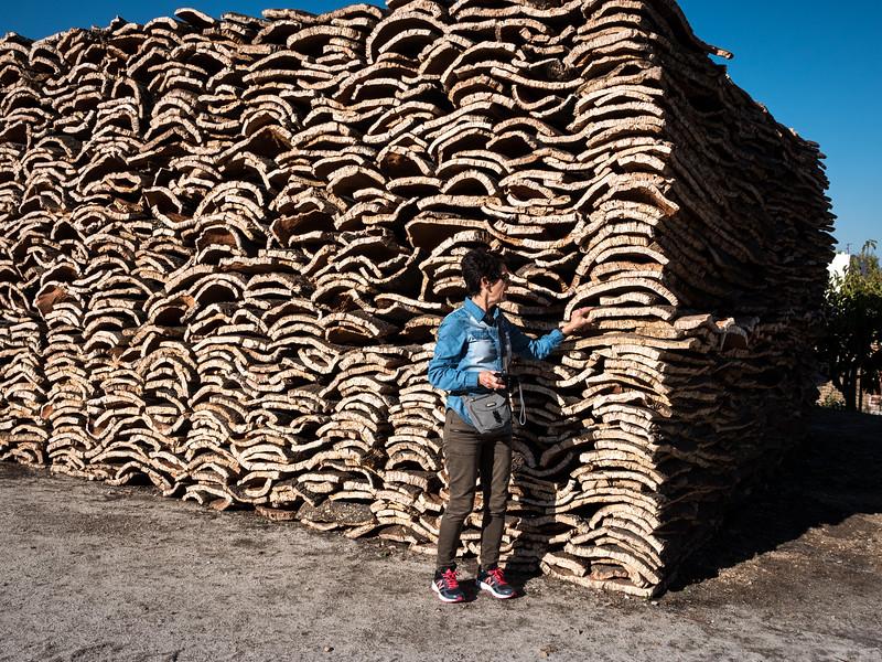 Stacks of cork harvested from cork oak trees