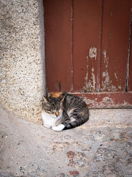 Local kitty