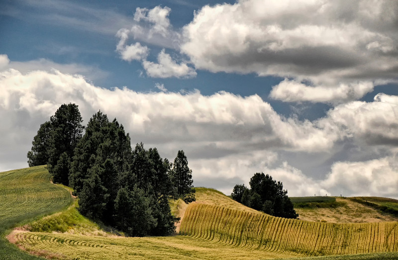 A typical Palouse landscape