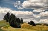 A typical Palouse landscape