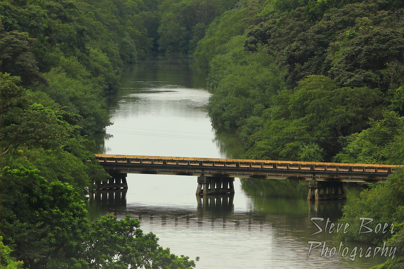 Jungle river bridge