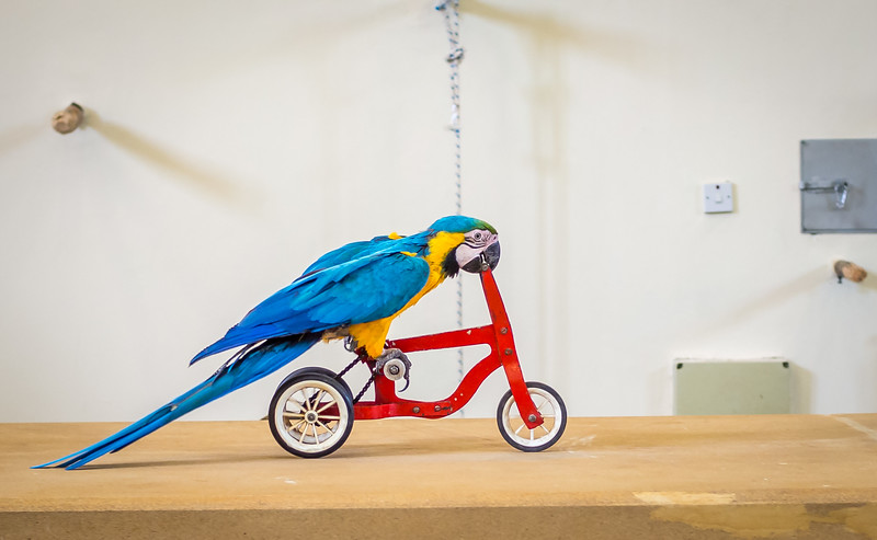 A parrot riding a bicycle in Paphos Zoo