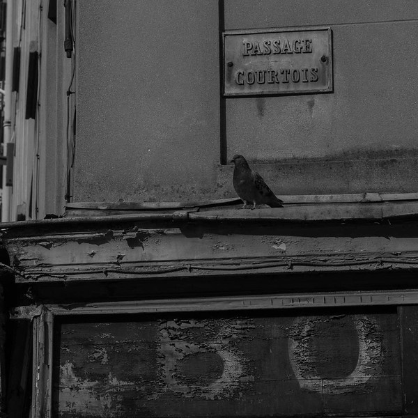 Old bakery storefront with pigeon, Paris