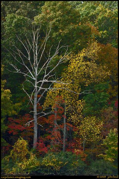 "(2Nov09)  shoreline color.  along the shore of the lake at sweetwater creek.  <a href=""http://carpelumen.smugmug.com/Photography/2008/November08/6426286_qkVug/1/408743064_b5CQ4/Medium"">one year ago.</a>  f/11, 1/50s, iso 200."