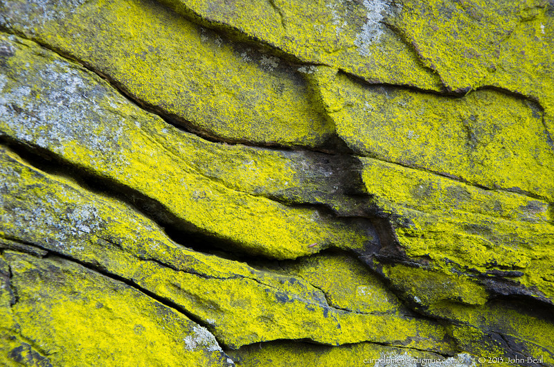 "(12Nov13)  covered rock.  i thought about captioning this one yellow, after yesterday's 'orange'.  <a href=""http://carpelumen.smugmug.com/Photography/2012/November12/26313624_9qcLnV#!i=2250196885&k=ZKRDh7d"">one year ago.</a>  f/7.1, 1/60s, iso 640."