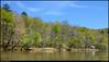 "7Apr11  new spring foliage along sweetwater creek.  <a href=""http://carpelumen.smugmug.com/Photography/2010/April10/11696745_oPfad/1/831108408_Tx2tZ/Medium"">one year ago.</a>  f/16, 1/320s, iso 800."