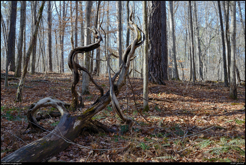 (9Feb11)<br /> <br /> roots of a fallen tree, sweetwater creek state park.<br /> <br /> f/11, 1/100s, iso 640.