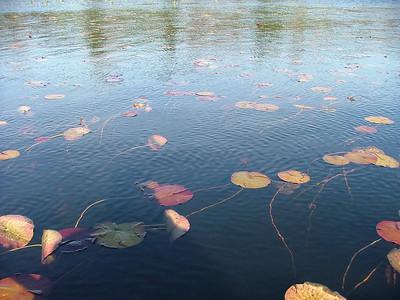 Lake plants