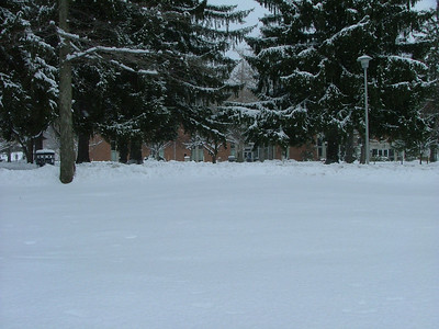 Snowy Eiche