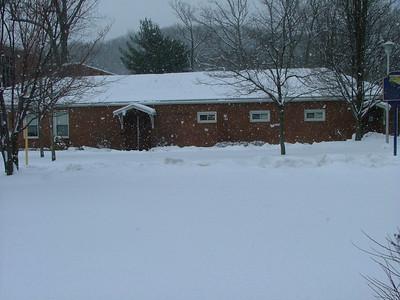 Elm in Snow