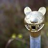 Puma. A standard icon of Peru.