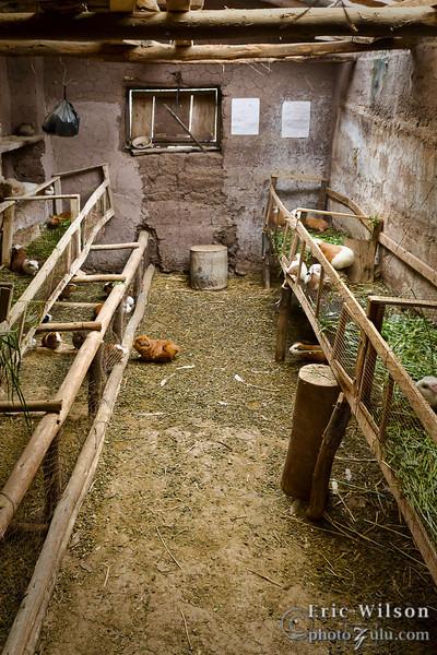 Guinea pig house.