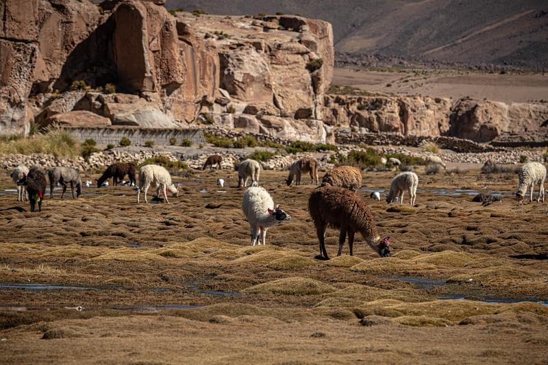 Salt Flats - Villamar Malcu-2079.jpg