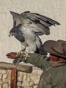 Hombre con Eagle