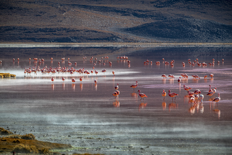 Salt Flats tour - Laguna Colorada - Red Lagoon-2429.jpg