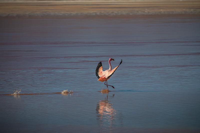 Salt Flats tour - Laguna Colorada - Red Lagoon-2675.jpg