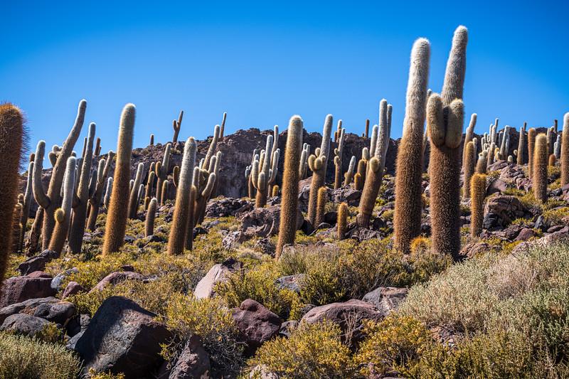 Salt Flats - Isla Incahuasi-3000.jpg