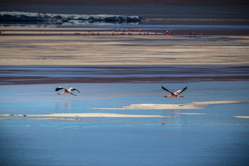Salt Flats tour - Laguna Colorada - Red Lagoon-2468.jpg