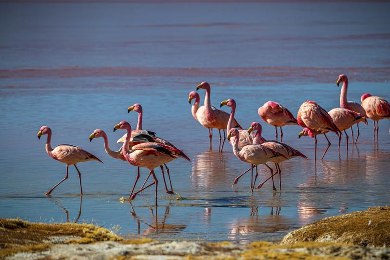Salt Flats tour - Laguna Colorada - Red Lagoon-2578.jpg