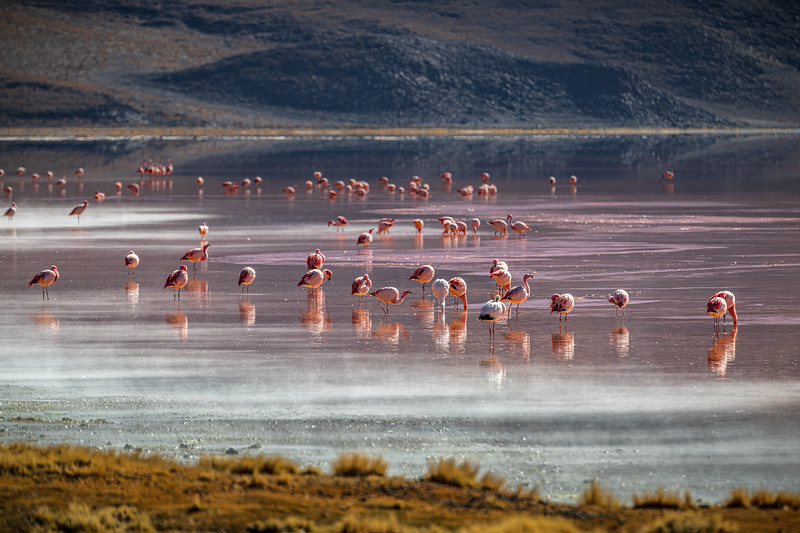 Salt Flats tour - Laguna Colorada - Red Lagoon-2445.jpg