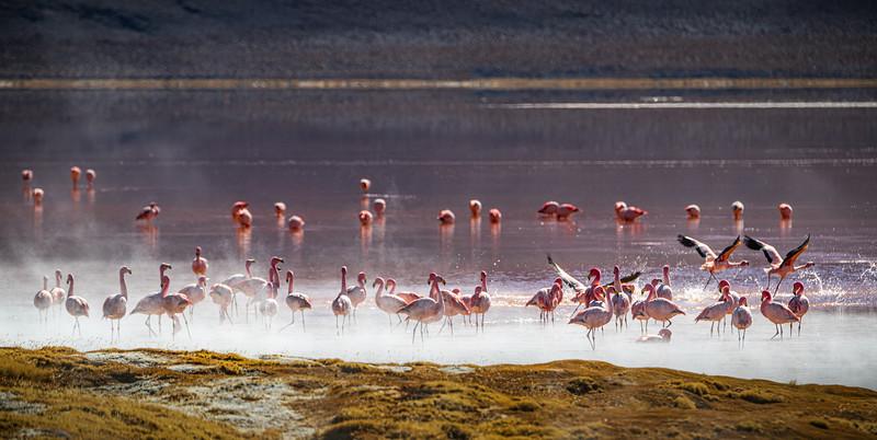 Salt Flats tour - Laguna Colorada - Red Lagoon-2533.jpg