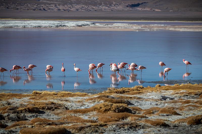 Salt Flats tour - Laguna Colorada - Red Lagoon-2473.jpg