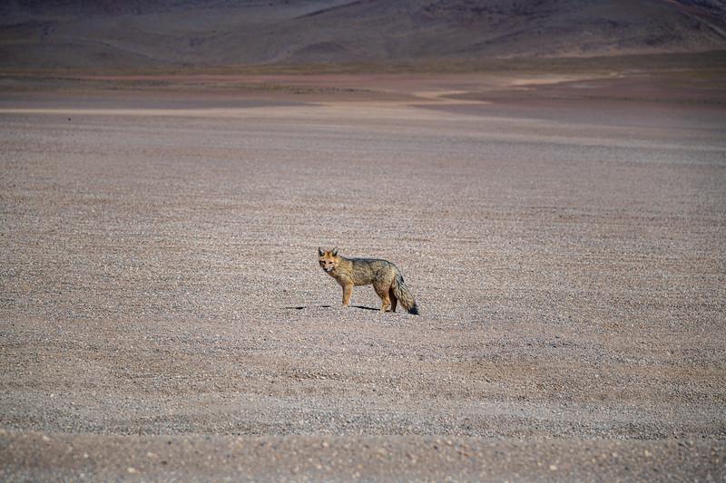 Salt Flats tour - Fox-2795.jpg